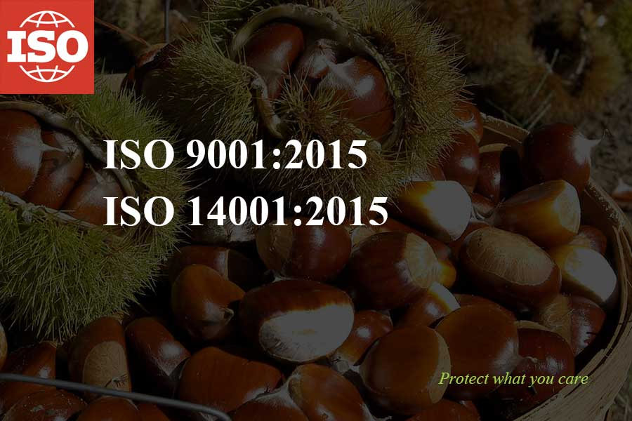 Iso 9001:14001 certificate